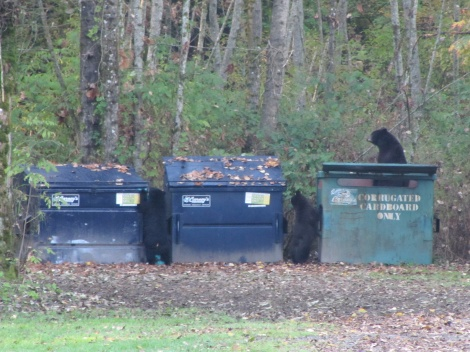 A visit from a mother black bear and her two cubs.